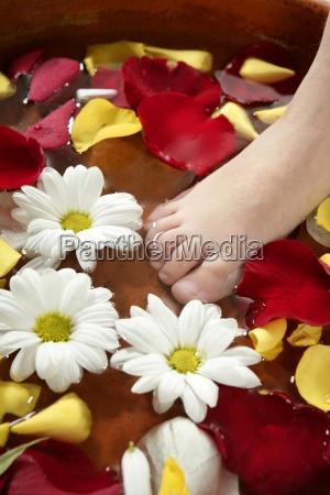 aromatherapy flowers feet bath rose petal