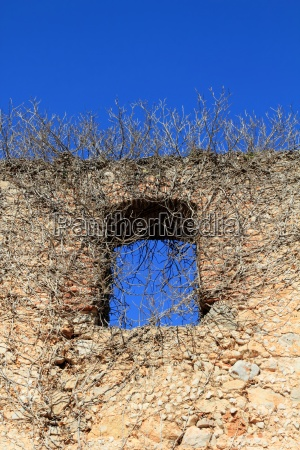 ancient castle wall window invaded by