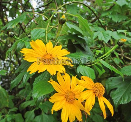 orange flowers in uganda