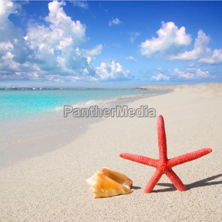 beach starfish and seashell on white