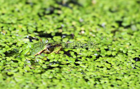 everything green frog camouflaged
