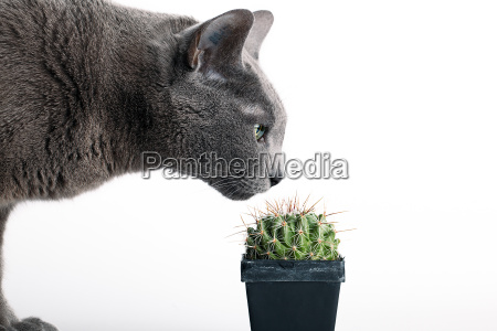 curious cat inspected cactus