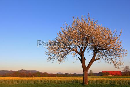 tree bloom blossom flourish flourishing spring