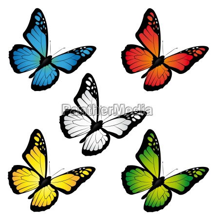 butterflies of different colors