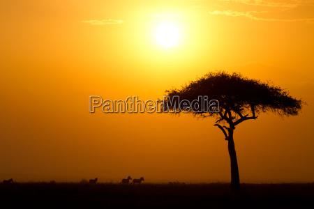dusk in the masai maria national