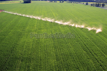 irrigation cornfield