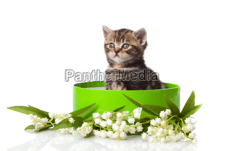 kitten in green gift box isolated