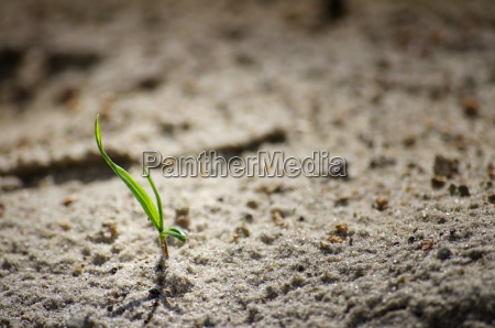 a small blade of grass in