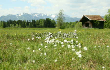 mountains agriculture farming bavaria fen meadow