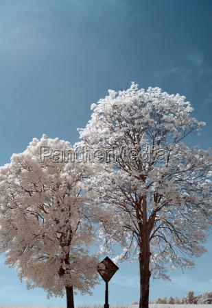 cross between trees in infrared