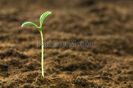 green seedling illustrating concept of new