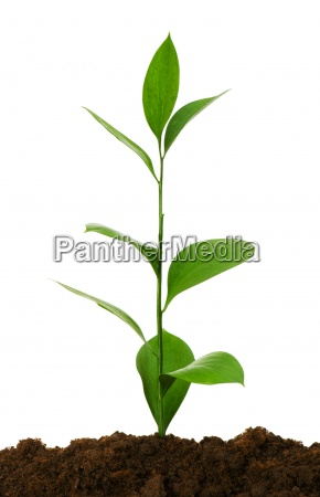 seedlings illustrating the concept of new