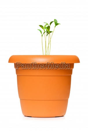 green saplings growing in the clay