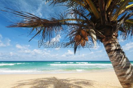 tropical beach scenery