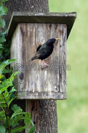 brut nest nesting nesting box bird
