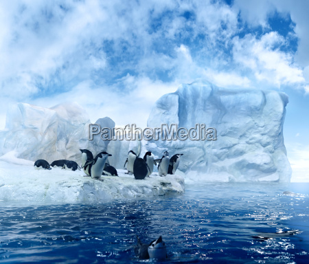 penguins on ice floe