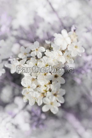 enchanting flowers background