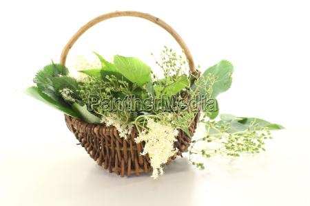 white elderflower