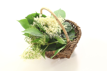 elderflower in basket