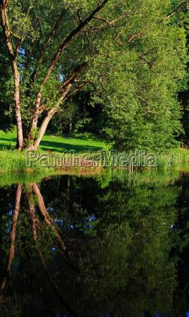 tree mirroring fresh water lake inland