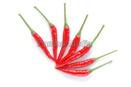 fresh chili isolated