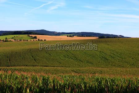 corn maisanbau maisfeld field natural landscape