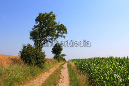 tree trees dirt road field lime