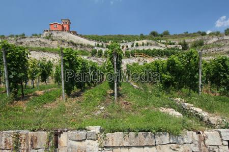 vineyard at the unstrut saxony anhalt
