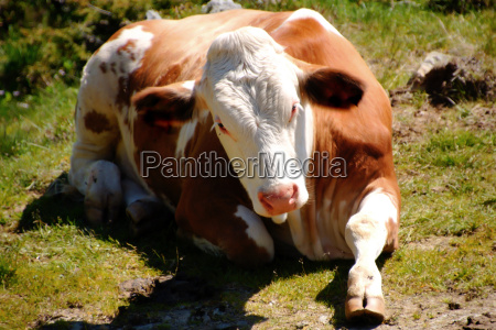 pastoralists