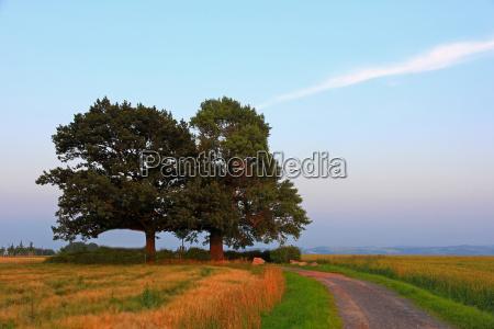 tree trees field oak poplar black