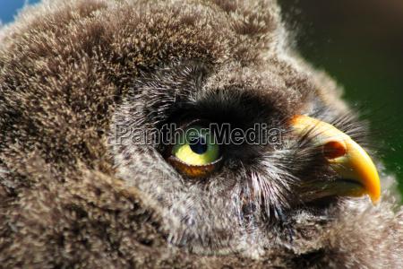 animal bird eye organ birds offspring
