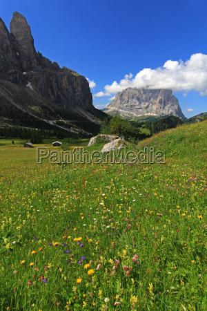 hike go hiking ramble alp flower