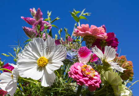 ostrich with colorful summer flowers against
