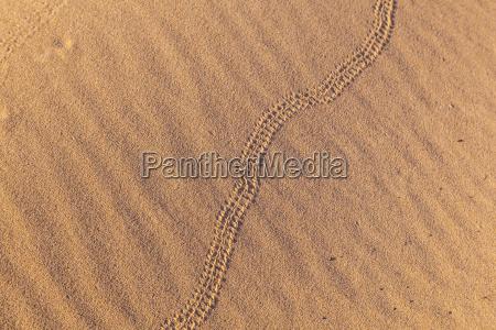 mark of snake in sand