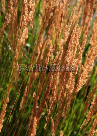 plant blade blade of grass meadow