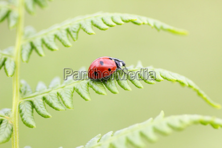 insects fern page sheet ladybug