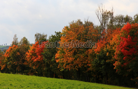 tree trees park colourful scenery countryside