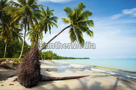 fallen palm tree on a sand