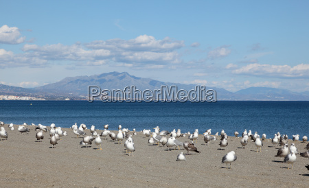 seagulls on the beach costa del