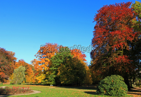 tree park bed beech colour scenery