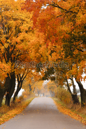 autumn maple road