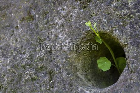 pedra verde horizontalmente buraco crescer planta