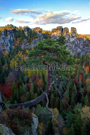 mountains pine valley mountain scenery countryside
