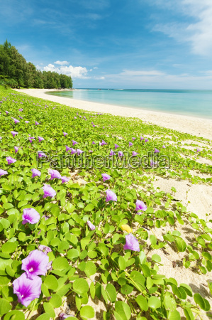flowers at the tropical beach vertical