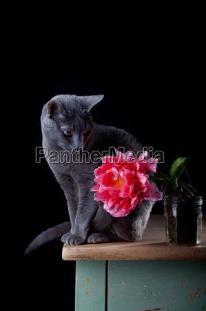 cat with tulip
