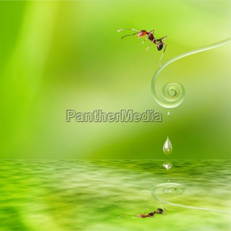 orange ant transparent on the plant