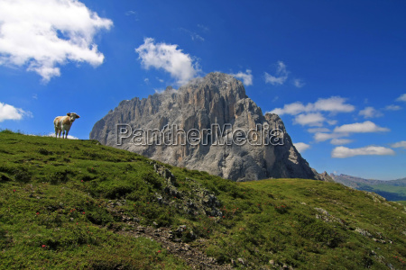 dolomites sight view outlook perspective vista