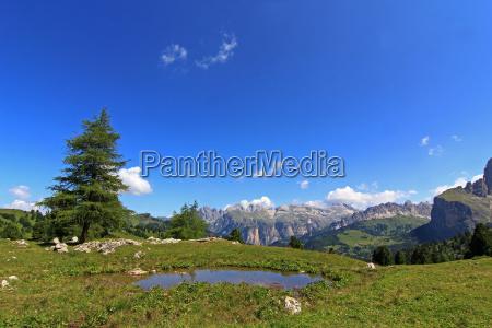 tree mountains dolomites alps south tyrol