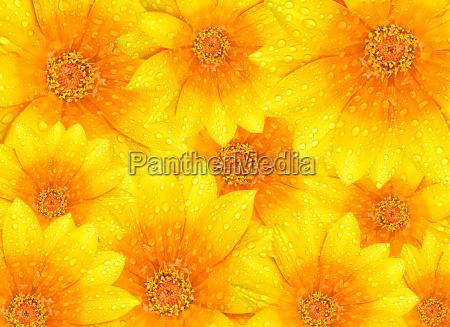 fresh yellow flowers background
