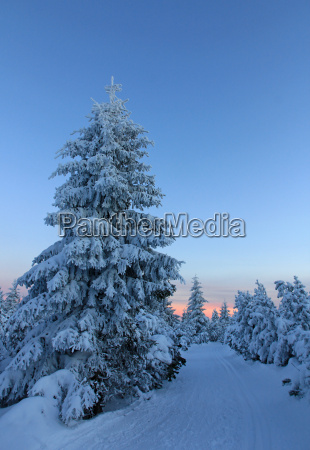 winter winter landscape snow scenery countryside